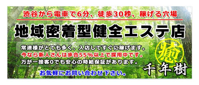 千年樹(せんねんじゅ)