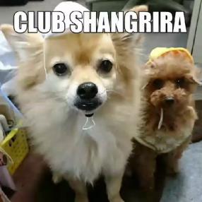 クラブ シャングリラの求人動画