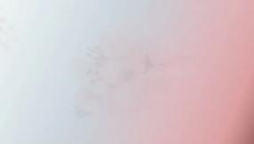 Kグループ(旧京都グループ)の求人動画
