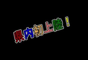 ぽちゃかわアイドルNo1もえたん!の求人動画