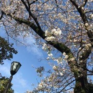 春風吹き荒ぶ