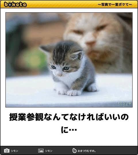 [お題]from:天然日和さん