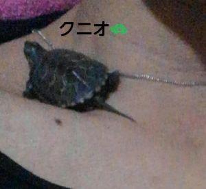 亀<img class=&quot;emojione&quot; alt=&quot;🐢&quot; title=&quot;:turtle:&quot; src=&quot;https://fuzoku.jp/assets/img/emojione/1f422.png&quot;/>