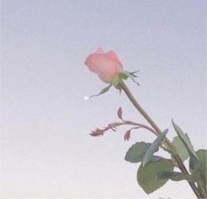 おはようございます(o^^o)?