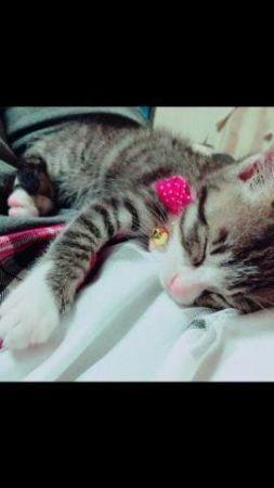 ヾ(*´・ω・`*)おやすみなさぁ~ぃ