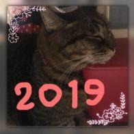 2019☆(*`・ω・)ゞ