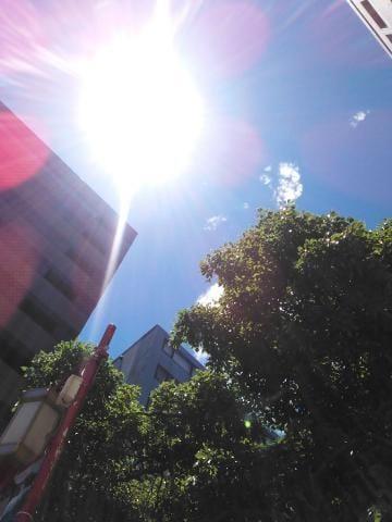 暑いね( ´-`)