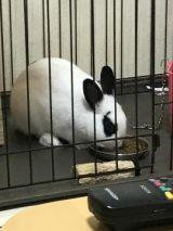<img class=&quot;emojione&quot; alt=&quot;🐰&quot; title=&quot;:rabbit:&quot; src=&quot;https://fuzoku.jp/assets/img/emojione/1f430.png&quot;/>