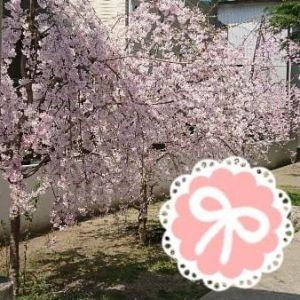 春の花好き♡♡♡
