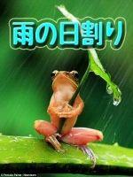 雨が降ったら雨の日割り☆