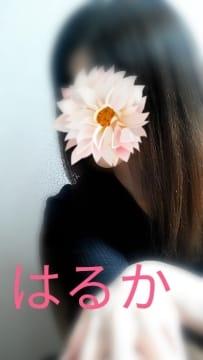 桜まだいけますか?