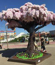 レゴランドの桜ですよ〜