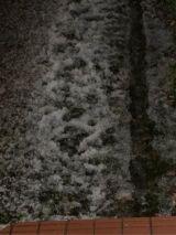 雷と雪っー!