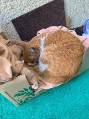 【徒然】猫ベッド