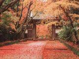 秋らしい秋。