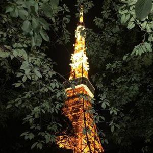 夜の東京タワーって♡