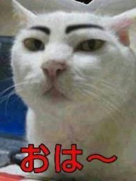 おはようございますo(^o^)o