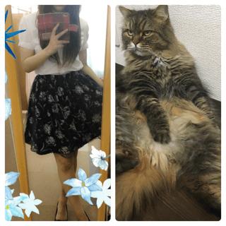 最近の。。。私と猫