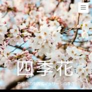 四季花(シキバナ)