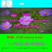 秋桜(Fall cherry tree)