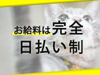 キティーズテラス東京本店で働くメリット5