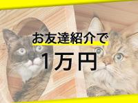 キティーズテラス東京本店で働くメリット7