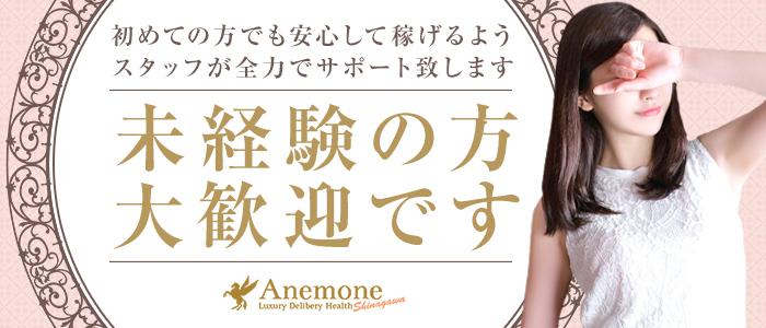 未経験・アネモネ Anemone 品川