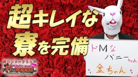 ドMなバニーちゃん 和歌山店のバニキシャ(スタッフ)動画