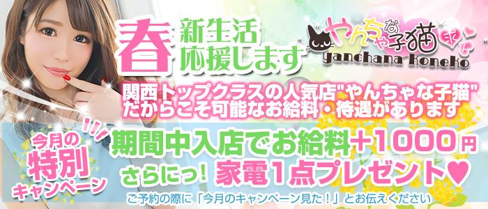 やんちゃな子猫 難波店の求人画像