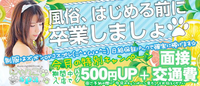 にゃんこスパ 神戸三宮店の求人画像
