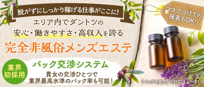オリーブの木の求人画像