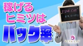 PINK CATの求人動画