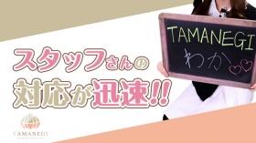 TAMANEGI(タマネギ)の求人動画