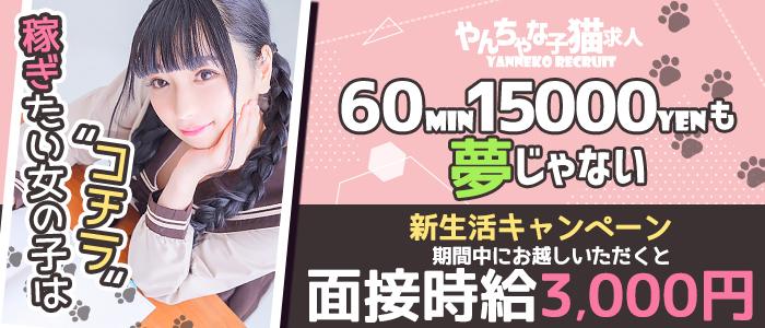 やんちゃな子猫 日本橋店の求人画像