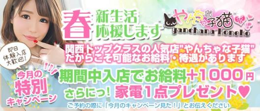やんちゃな子猫神戸三宮店